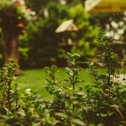 Partner Post: How Your Garden Can Add To Your Health And Wellbeing